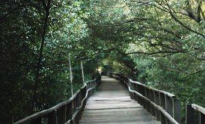 Hutan Mangrove Morosari Sayung