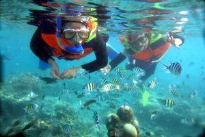 diving di pulau derawan