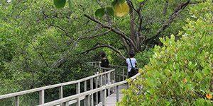 Hutan Mangrove Gunung Anyar