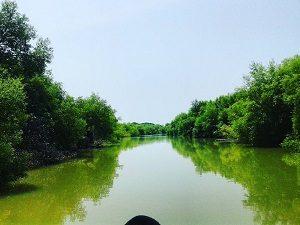 Muara Gembong Mangrove, Bekasi