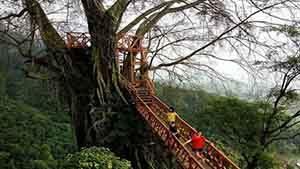 Rumah Pohon di Curug Ciherang