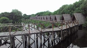 Wisata Alam Mangrove, Muara Angke