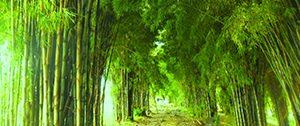 Hutan Bambu Serpong