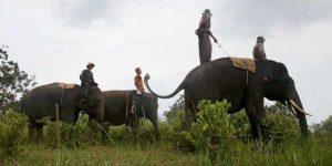 Menunggang Gajah Keliling Taman Nasional