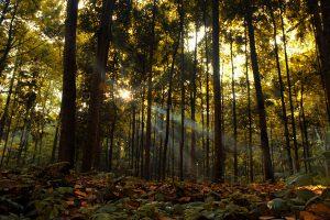 tempat wisata keluarga dibogor - Hutan Cifor
