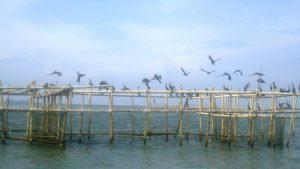 Tanjung Burung Tangerang