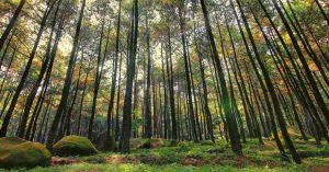 Hutan Pinus Imogiri Tempat Wisata Romantis di Jogja