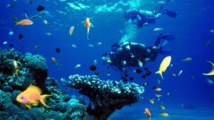 Kepulauan Wakatobi