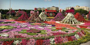 Dubai Flower Garden - UAE