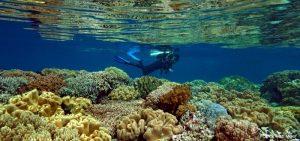 Halmahera Utara, Maluku Utara