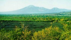 Hutan Evergreen