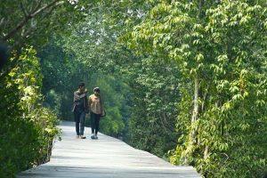 Hutan Mangrove Kampoeng Nipah