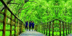 Hutan Mangrove Muara Angke Jakarta