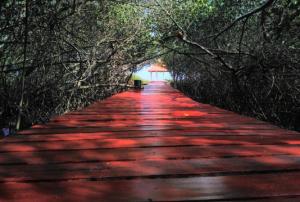 Hutan Mangrove Rembang