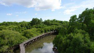 10 Hutan Mangrove di Indonesia yang Dibuka untuk Destinasi Wisata - TempatWisataUnik.com