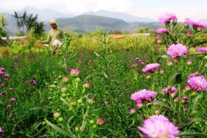 Kebun Bunga Sidomulyo - Batu