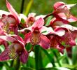 12 Taman Bunga Terindah di Indonesia yang Cantik dan Wajib Dikunjungi