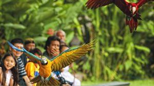 Keistimewaan Bali Bird Park