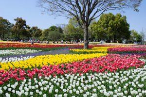 Kiso Sansen Park Tulip Festival, Kaizu - Japan