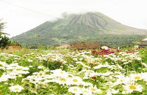 Kota Bunga Tomohon - Sulawesi Utara