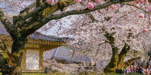 Kuil Daigo-ji