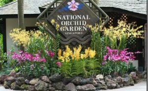 Orchid Gardens - Bali