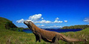Sabana Kepulauan Komodo