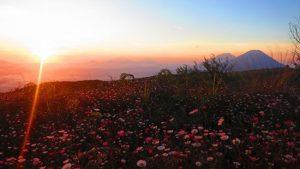 Taman Bunga di Dataran Tinggi Dieng