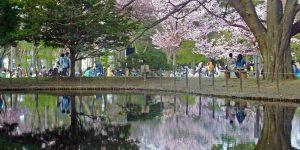 Taman Maruyama