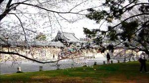 Taman Nasional Kyoto Gyoen