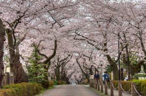 Wilayah Tengah Tokyo (Minato)