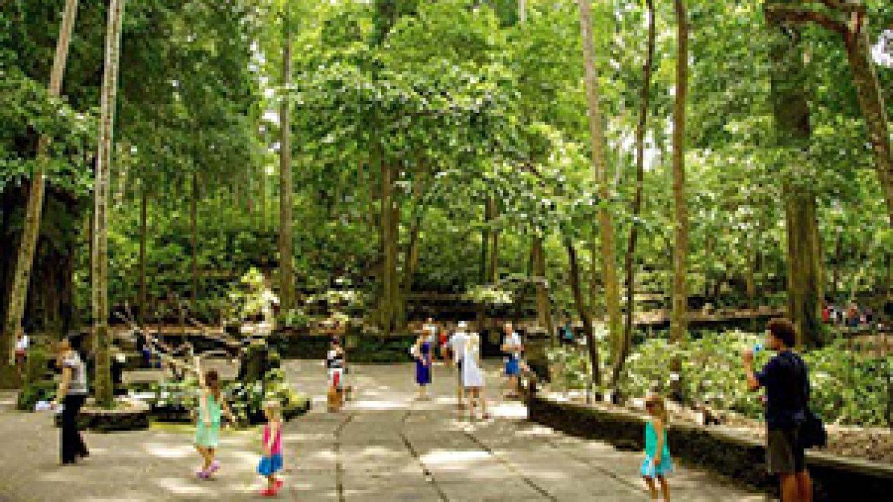 15 Tempat Wisata Hutan di Bali yang Tersembunyi   TempatWisataUnik.com