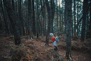 Baredok Pine Forest