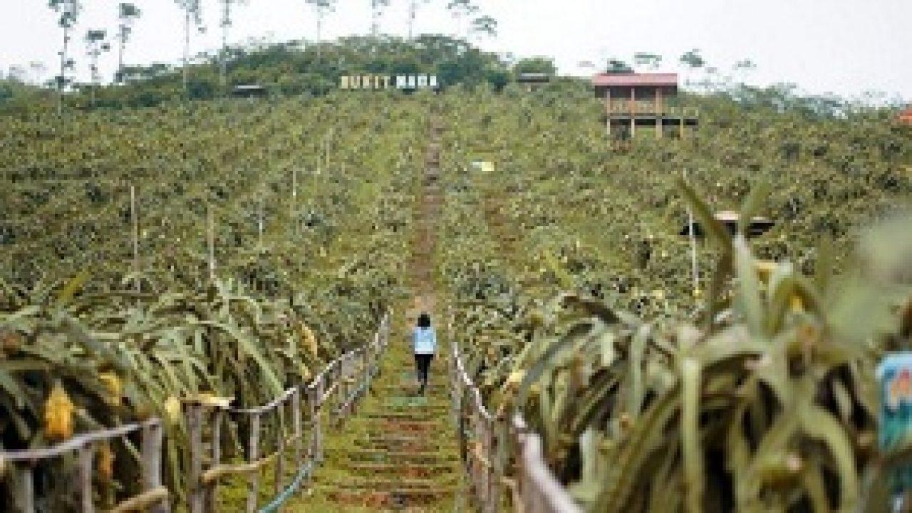 10 Tempat Wisata di Pati yang Keren Banget - TempatWisataUnik.com