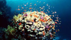 tempat wisata di Cairns